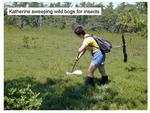 Collecting Insects from a Wild Bog