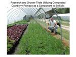 Research and Grower Trials Utilizing Cranberry Pomace as a Component to Soil Mix