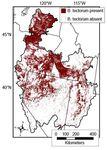 Model of cheatgrass (Bromus tectorum) distribution across the Great Basin, USA