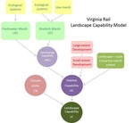 Designing Sustainable Landscapes: Representative Species Model: Virginia Rail (Rallus limicola) by William V. DeLuca