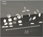 Data for Autonomous snapping and jumping polymer gels