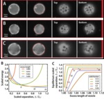 Data for Elastically-mediated Positioning of 2D Colloids