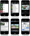 Lights, Camera...Citizen Science: Assessing the Effectiveness of Smartphone-based Video Training in Invasive Plant Identification dataset
